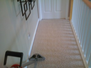 O.G professional Carpet Care